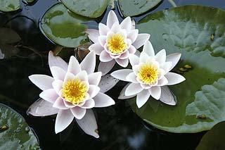 Zdjęcie roślin różnych środowisk